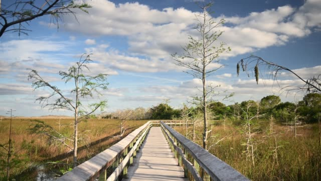 Video of Everglades National Park Landscape in Florida  USA