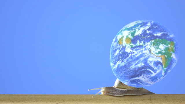 UHD Video Of Garden Snail Carrying Earth Image video