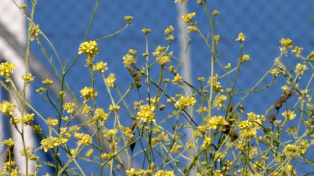 Flowers yellow and red with roadside traffic HD video video