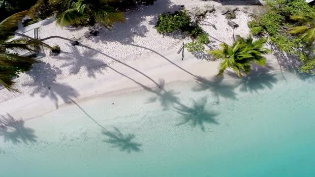 video of Maho Bay Beach, St. John, US Virgin Islands video