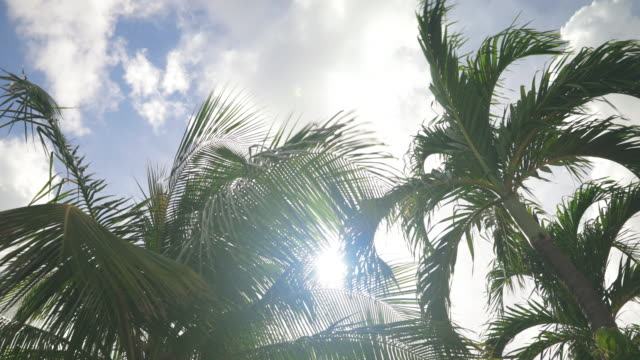 4K Video of Palm Trees Moving with the Wind Against Blue Sky 4K Video of Palm Trees Moving with the Wind Against Blue Sky, Shot in the Caribbean, Curacao curaçao stock videos & royalty-free footage