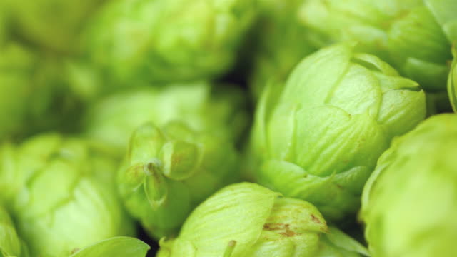 Video of rotating hops in 4K High quality video of rotating hops in 4K ingredient stock videos & royalty-free footage