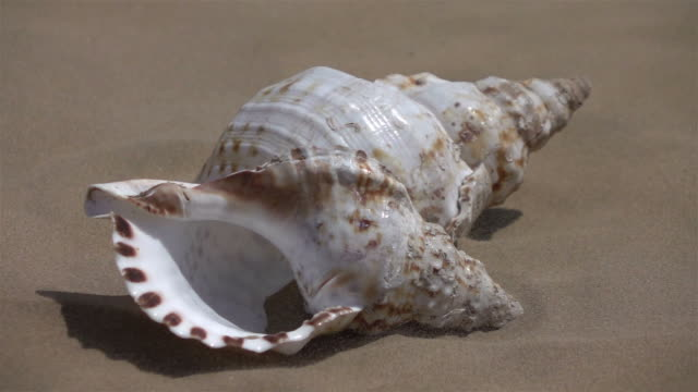 vídeos de stock e filmes b-roll de video of shell on the sand in real slow motion - bugio