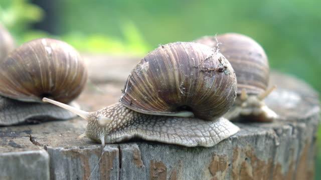 Video of snails in 4K video