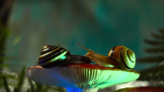 video of snails love - zachowanie zwierzęcia filmów i materiałów b-roll