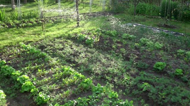 video der bewässerung bio-gemüsegarten in echte zeitlupe - gemüsegarten stock-videos und b-roll-filmmaterial