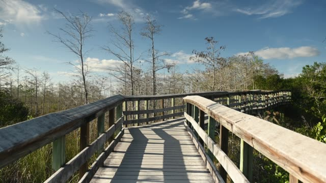 Video of Wooden Boardwalk Trail Through Dwarf Cypress Trees in Everglades National Park Landscape in Florida  USA