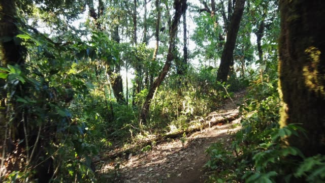 vídeos de stock e filmes b-roll de 4k video pov point of view stabilized shot hiking in forest crossing pathway in the morning with sunlight - descuidado