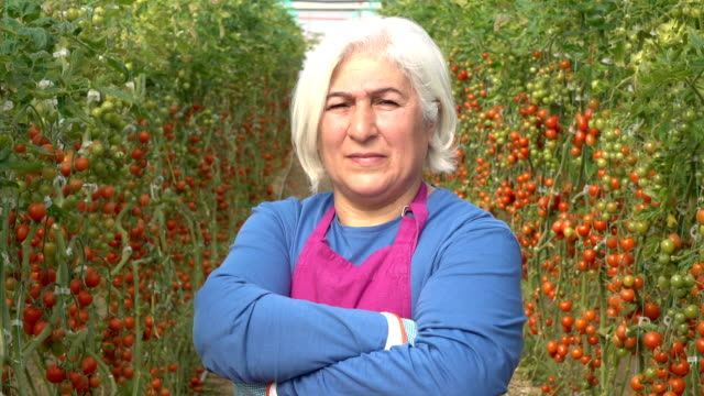 Video Portrait Of Senior Woman Working In Tomato Greenhouse video