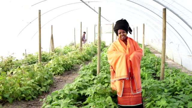 Video Portrait Traditional Xhosa African Woman in vegetable tunnel video
