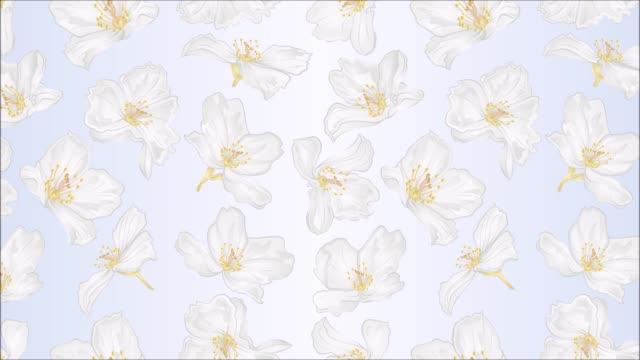 video nahtlose schleife animation der illustration jasmin blumen festliche hintergrundbewegung - jasmin stock-videos und b-roll-filmmaterial