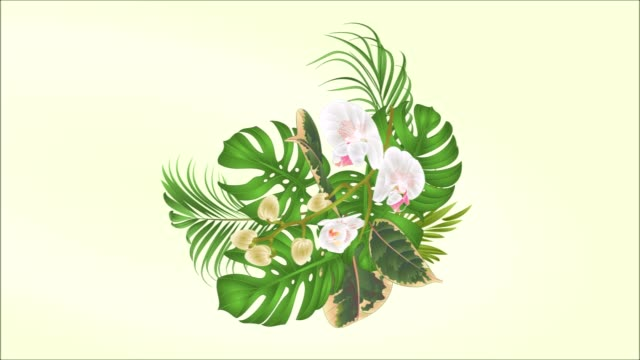 Video seamless loop bouquet with tropical flowers  floral arrangement, with beautiful Phalaenopsis  purple and white orchids, palm,philodendron and ficus  motion