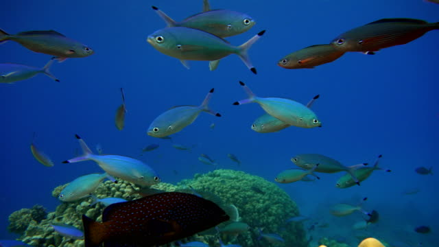Video shooting at a shallow depth. The corals and tropical fish. video
