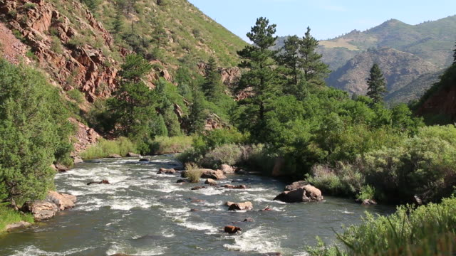 HD video South Platte River and Colorado mountains Willows and pine trees line the edge of the South Platte River as it flows through the Rocky Mountains in Waterton Canyon Colorado. rapids river stock videos & royalty-free footage