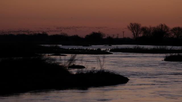HD video sunrise over Platte River sandhill cranes Nebraska video