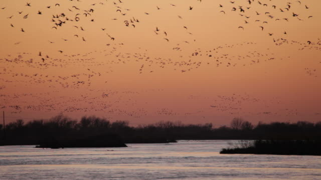HD video sunset over Platte River sandhill cranes Nebraska video