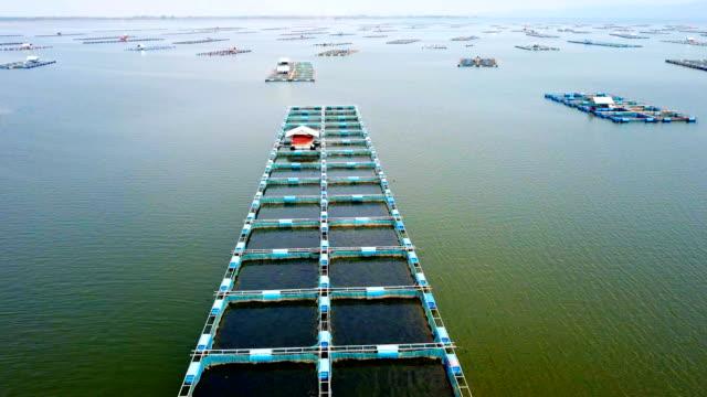 Video view aerial Cage fish farming, Ubonrat dam in Khon Kean, Thailand.