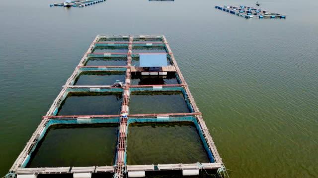 Video view aerial Cage fish farming, Ubonrat dam in Khon Kean, Thailand. video