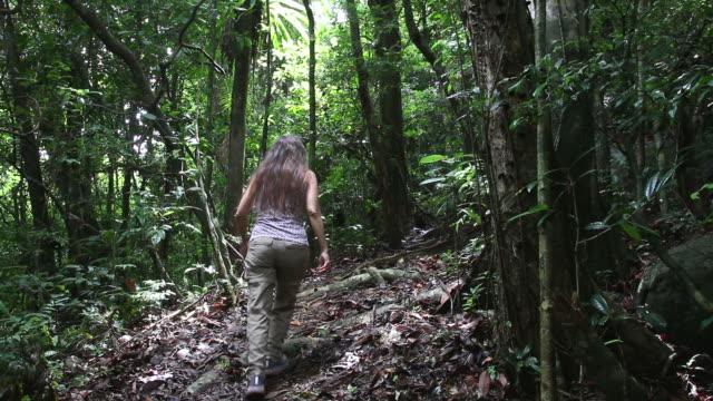 hd video woman hikes nosy mangabe island reserve rainforest madagascar - madagaskar bildbanksvideor och videomaterial från bakom kulisserna