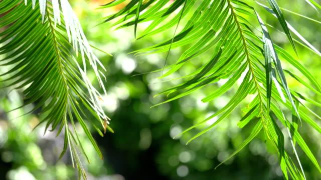 videos of hawaii palm leaves in 4k - проспект стоковые видео и кадры b-roll