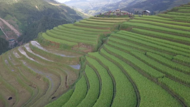 vietnam landscapes with terraces rice field - cambogia video stock e b–roll