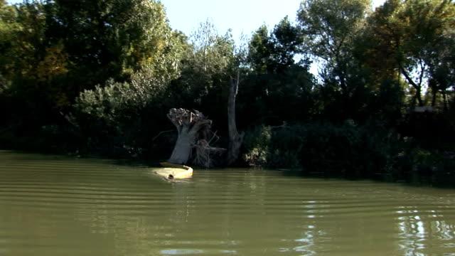 blick von einem boot beim segeln den fluss hinunter - karotte peace stock-videos und b-roll-filmmaterial
