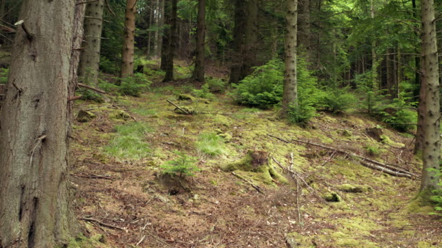View from a drone as it descends in an area of Scottish woodland video