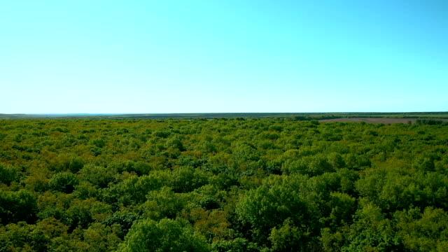 大きな緑の森の上の四重コプターからの眺め。木々の緑の葉。空中写真。サマラ(ロシア) - マルチコプター点の映像素材/bロール