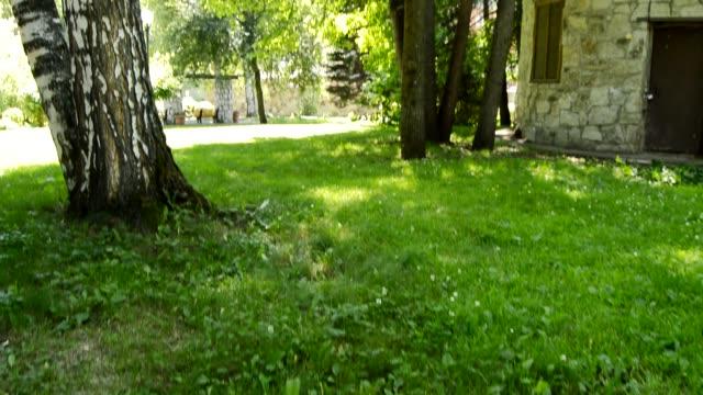 utsikt från en gunga, kamera svänger upp och ner, vacker natur i en sommar park, hd video - lucia bildbanksvideor och videomaterial från bakom kulisserna