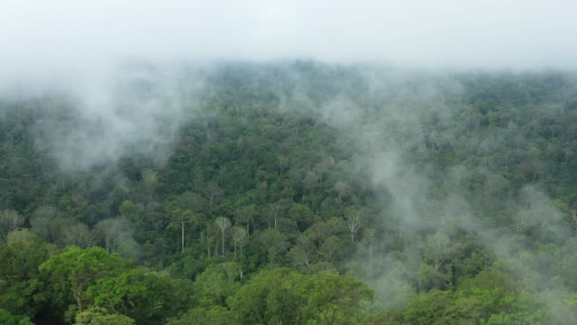 view from above, stunning aerial view of a tropical rainforest with clouds formed from water vapor released from trees and other plants throughout the day. - anidride carbonica video stock e b–roll
