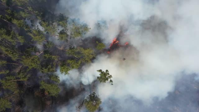 utsikt från drönare till eld i skogen. - roof farm bildbanksvideor och videomaterial från bakom kulisserna