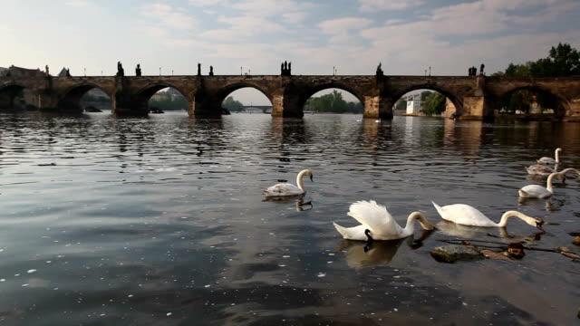 kampa からのチャールズ橋 - チェコ共和国点の映像素材/bロール