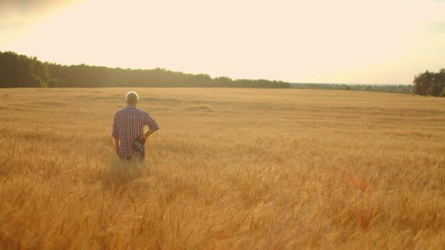 vista dal retro: un anziano contadino dai capelli grigi in camicia guarda un campo di grano al tramonto dopo una giornata di lavoro. il conducente del trattore si toglie il berretto al tramonto guardando il campo dei cereali - braccio umano video stock e b–roll