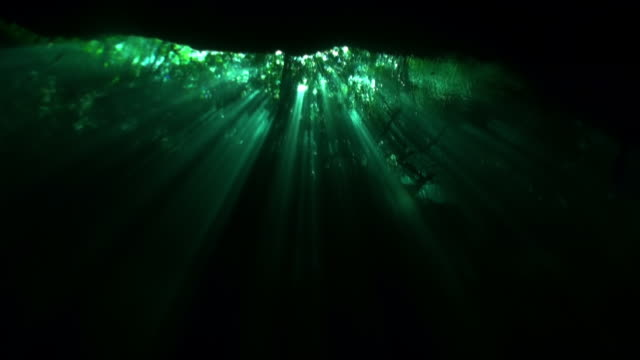 Mening van onder duidelijk water aan bomen en boomwortels en straal van zonnen in cenotes. video