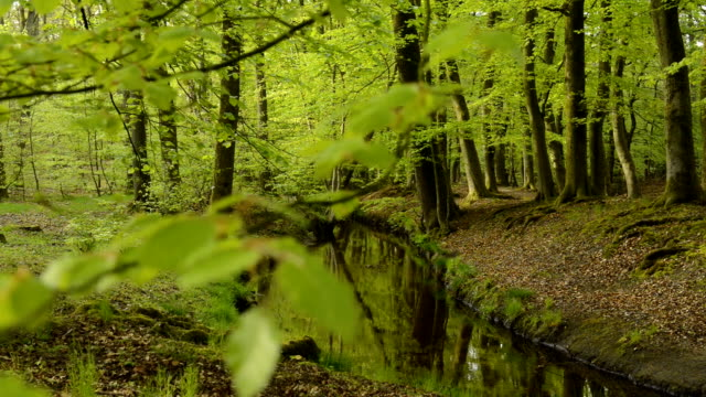 View in a green forest with a creek – film