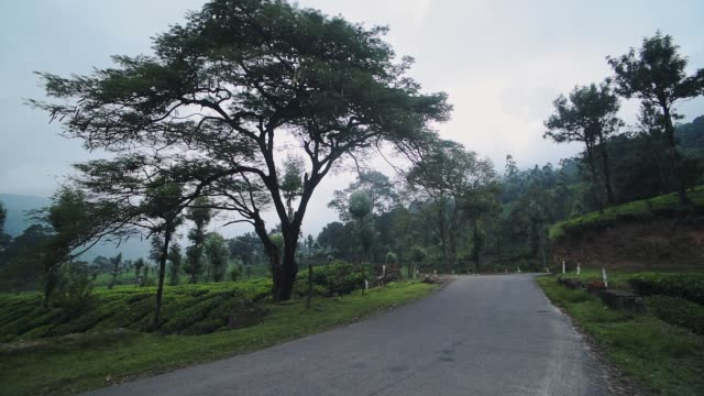 View of a country road, surrounded by trees and tea plantations, in Munnar, India