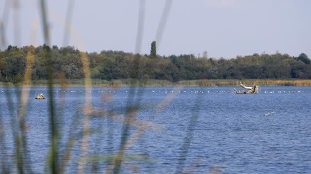 水上の鳥でいっぱいの湖の眺め - 水鳥点の映像素材/bロール