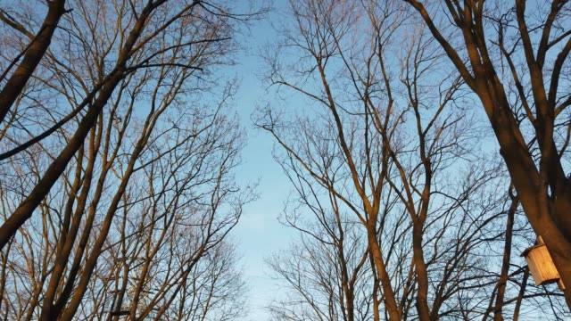 view of a leafless tree against a blue sky. bare old trees in the fall - albero spoglio video stock e b–roll
