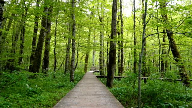 view of a personal perspective walk through the wooden flooring in the forest - пешеходная дорожка путь сообщения стоковые видео и кадры b-roll