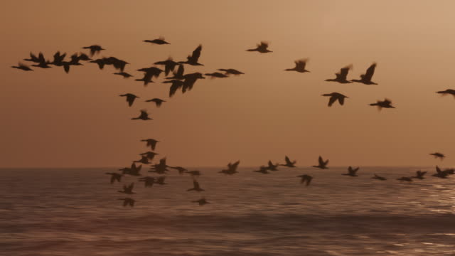 4K view of Birds flying at sunset over the sea video