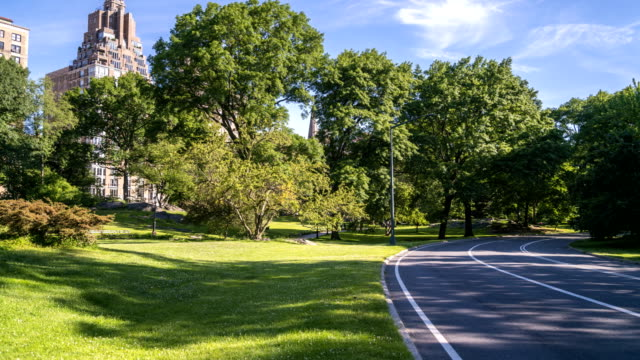 View of Central Park Sunning Path and Surrounding Buildings