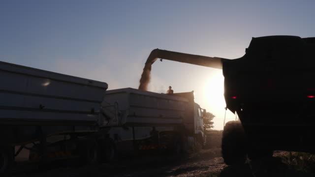 4K view of combine harvester harvesting corn video
