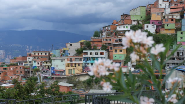 "view of ""comuna 13"" neighborhood with white flowers in foreground - medellin colombia - колумбия стоковые видео и кадры b-roll"