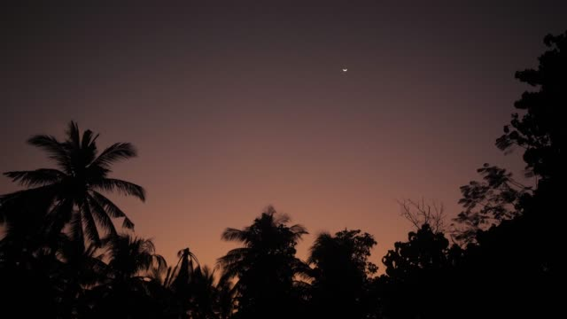 a view of crescent moon over tropical trees at twilight - полумесяц форма предмета стоковые видео и кадры b-roll