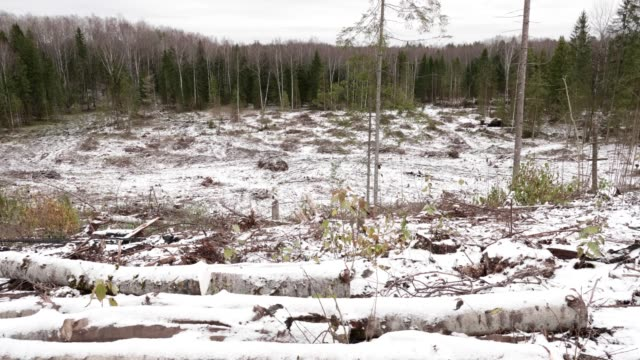 View of felled forest - video