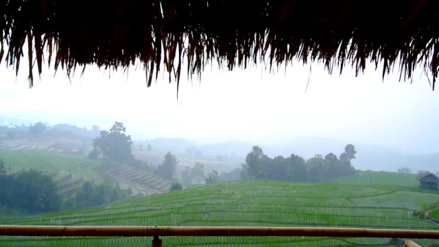 view of green rice terrace field mountains with rainning drops from roof view inside of the bamboo cottage home stay in northen of Thailand video