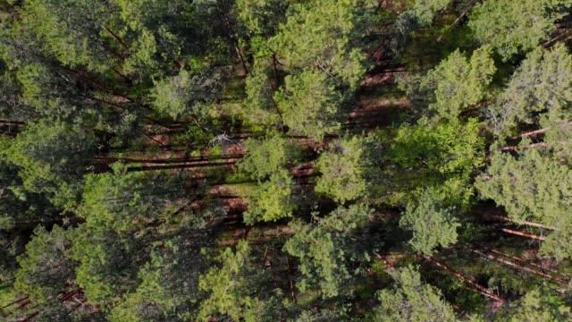 blick auf das riesige dickicht des grünen waldes - baumgruppe stock-videos und b-roll-filmmaterial