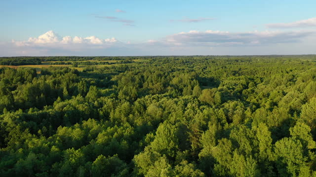vídeos y material grabado en eventos de stock de vista del lago y los árboles y las plantas en el horizonte - bielorrusia