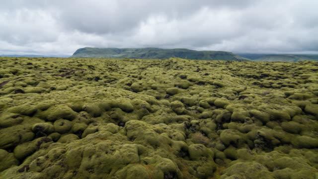 view of moss covered lava fields - muschio flora video stock e b–roll