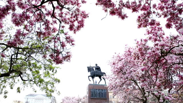 View of park, statue and magnolia blossoms video